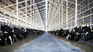 """Tiefe Einblicke in die industrielle Milchwirtschaft gibt die Doku """"Das System Milch"""" von Andreas Pichler. Foto: Pichler"""